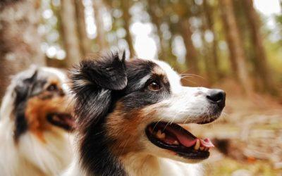 La nourriture bio pour chiens au banc d'essai