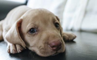 Education positive du chien : pourquoi ? comment ?