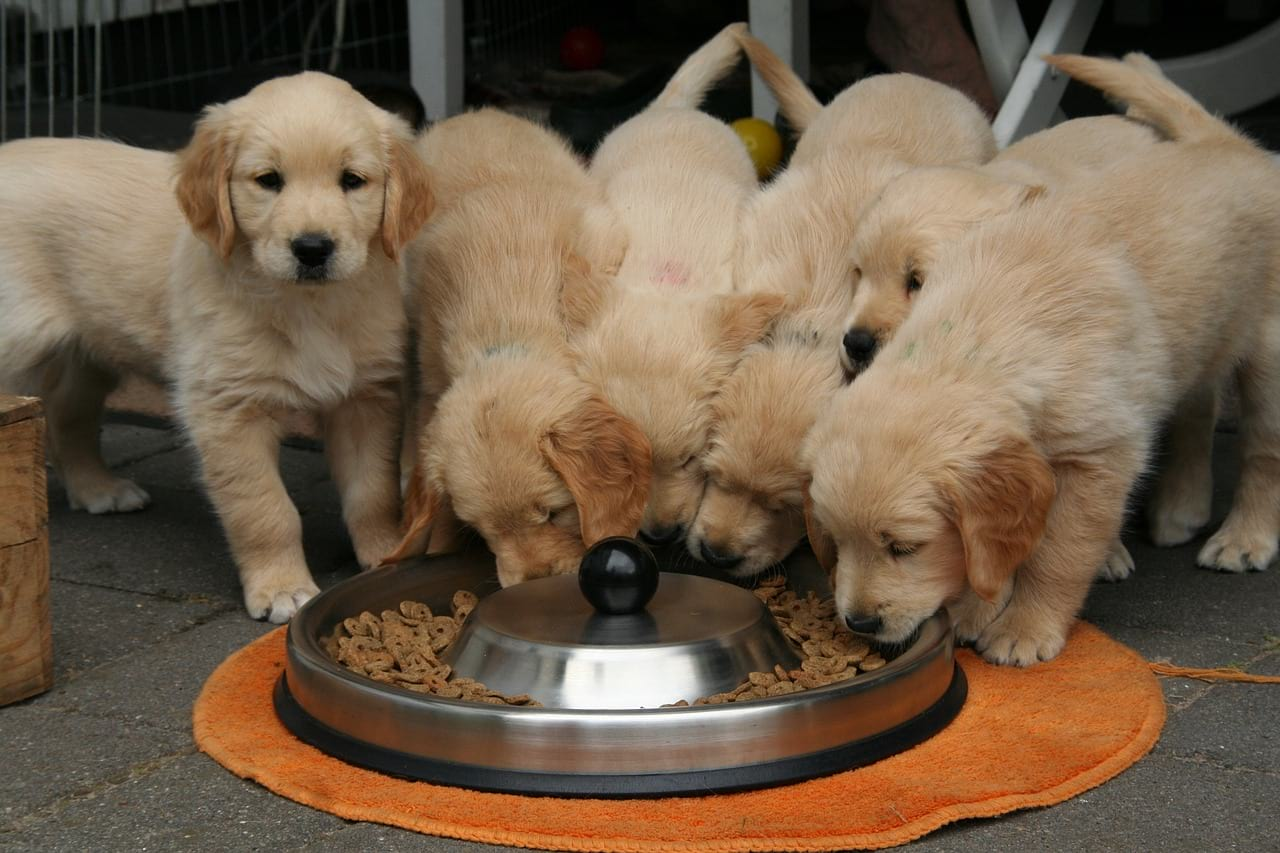 toxiques les croquettes pour chiens mon chien bio. Black Bedroom Furniture Sets. Home Design Ideas