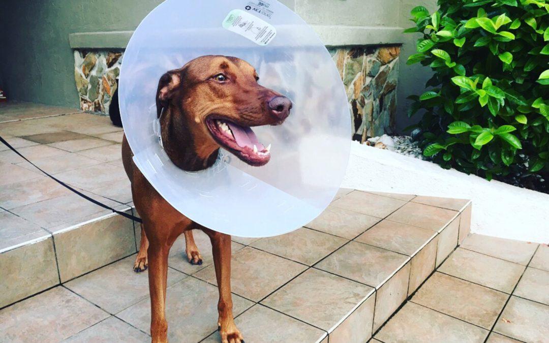Médicaments chez le chien : vraiment sans risques?