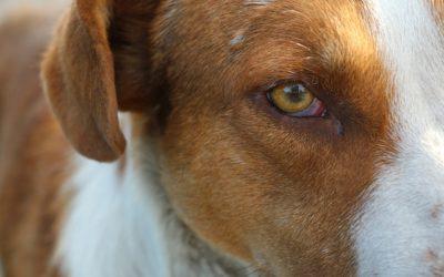 Décès du chien : que faire de sa dépouille ?