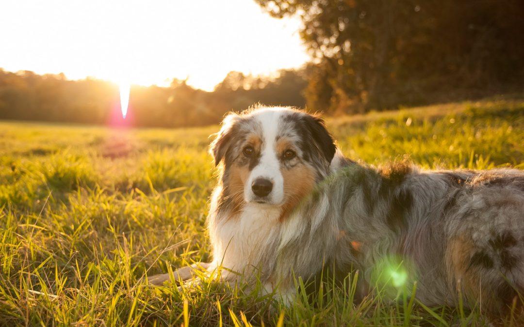 Du bio pour mon chien : tous les bienfaits