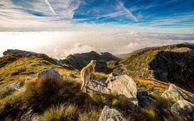 Empreinte écologique de mon chien : comment je la réduis