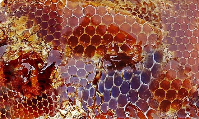 Les bienfaits du miel pour le chien