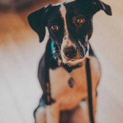 Signes-arthrose-chien-Monchienbio.com