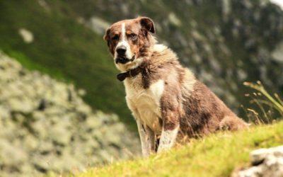 Huiles essentielles pour les chiens : comment les utiliser ?