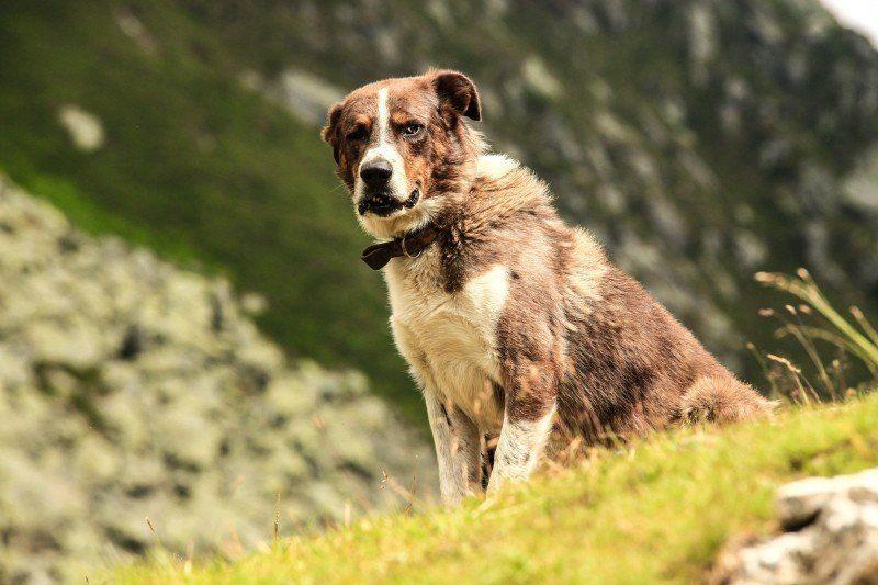 Comment utiliser les huiles essentielles pour les chiens ?
