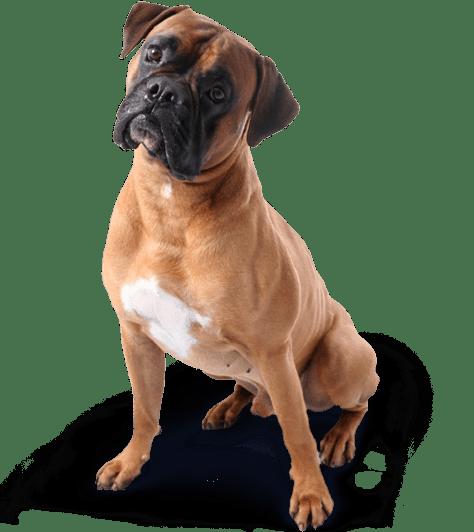 Les chiens expriment des émotions