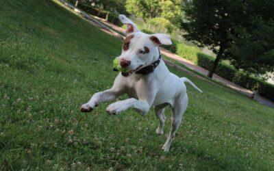 Traitements naturels des vers du chien par les plantes