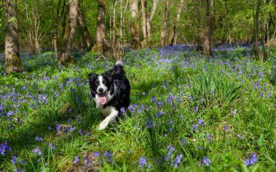 Quels sont les anti tiques naturels pour chien?