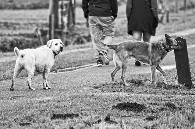 odorat du chien : le chien reconnait ses congénères