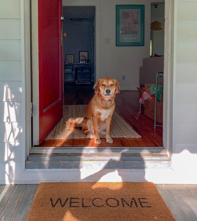 chien qui veut sortir
