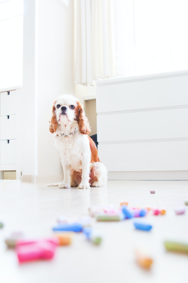 chien qui a fait des bêtises quand il était seul