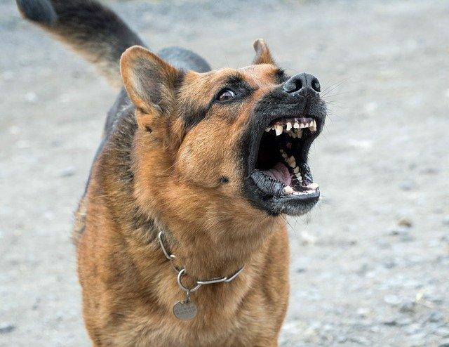 Faire appel à un comportementaliste lorsque le chien est aggressif