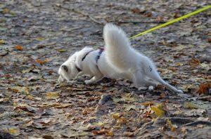 faire appel à un éducateur canin pour obéir