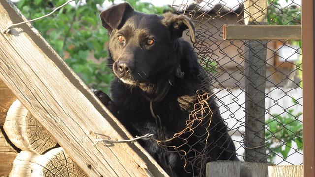 le comportementaliste aide le chien à canaliser ses tendances excessives (aboiement, surprotection)