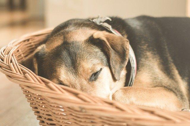 panier : territoire du chien