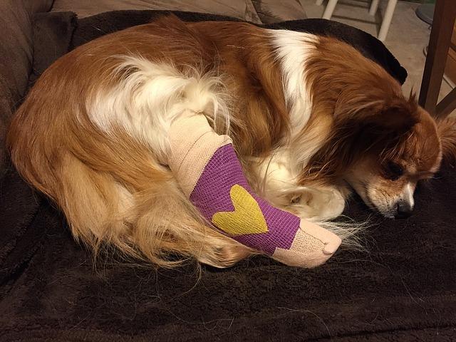 L'importance de la convalescence en ostéopathie animale