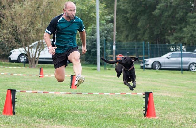 précautions à prendre pour le chien qui fait une activité sportive intense