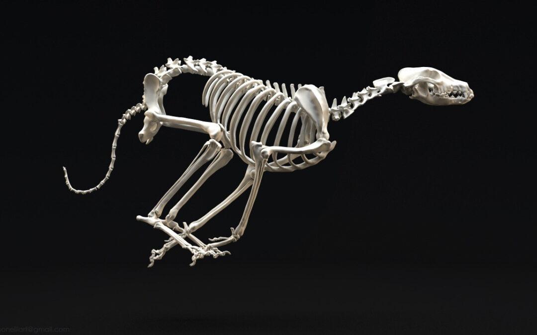 Entretien avec Meryl Thieblemont spécialisée en ostéopathie animale