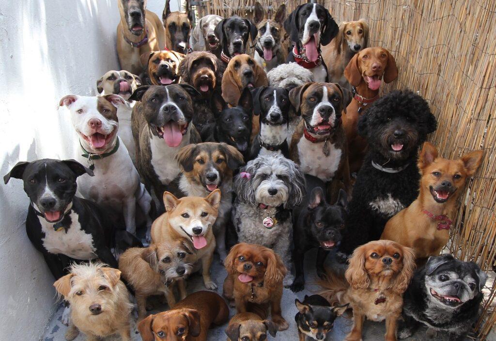 L'ostéopathie animale conseille de respecter les besoins du chien.