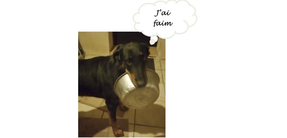 chien trop gros qui demande à manger plus.