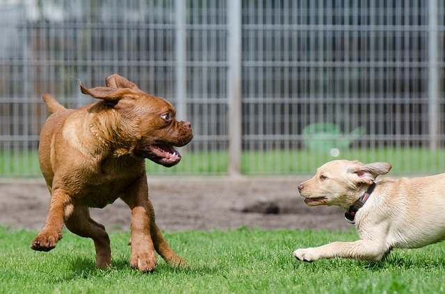 jeu chiens