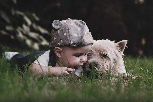 l'arrivée d'un bébé peut être stressant pour le chien : les élixirs floraux peuvent aider