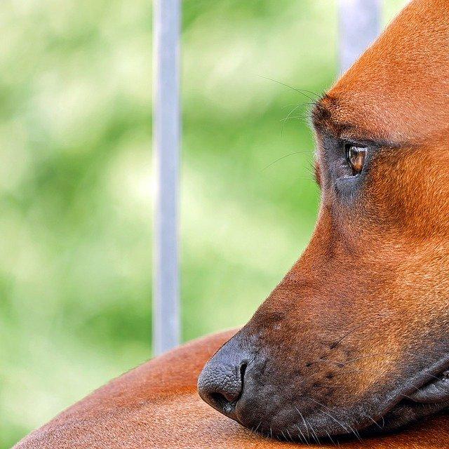les chiens de refuge bénéficient de l'élixir étoile de Béthléem