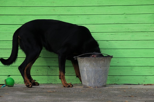Astuces pour faire boire une infusion à son chien