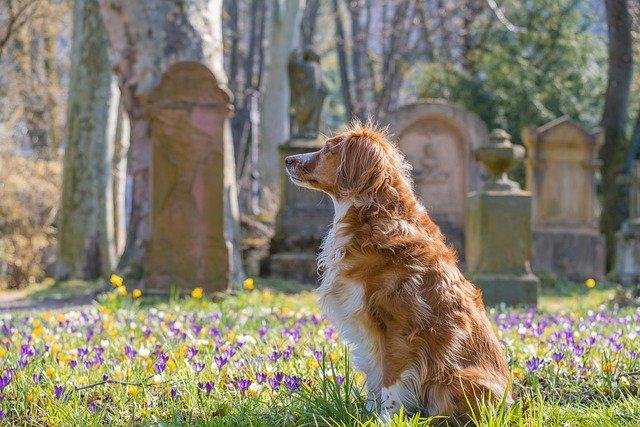 Le chien aussi doit faire son deuil : pensez à la fleur de Bach étoile de Béthléem